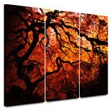 Fire Breather: Japanese Tree 3 piece gallery-wrapped canvas
