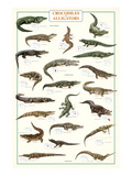 Crocodiles et alligators Reproduction d'art