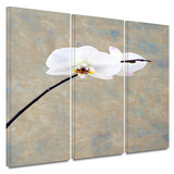 Orchid Blossom 3 piece gallery-wrapped canvas