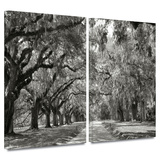 Live Oak Avenue 2 piece gallery-wrapped canvas