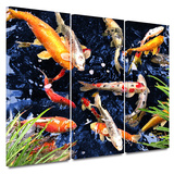 Koi 3 piece gallery-wrapped canvas