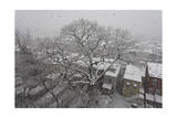 Rooftops and Backyards in Snow Storm