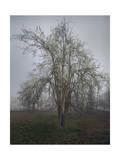 Apple Tree Chapel Hill