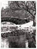 The Gapstow Bridge of Central Park in Winter  Manhattan in New York City
