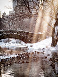 Instants of NY Series - the Gapstow Bridge of Central Park in Winter  Manhattan in New York City