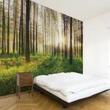 Sunbeam Wall Decal