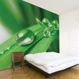 Pure Wall Decal