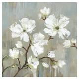 Sweetbay Magnolia I - Mini