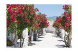 Garden Bloom  Villa Rufulo  Ravello  Italy