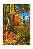 Coastal Forest Autumn Scenic  Maine