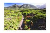 Coastal Path  Big Sur Coast  California