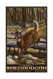 White tailed deer in Shenandoah National Park 2691