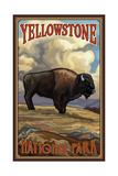 Yellowstone National Park Bison Pal 51
