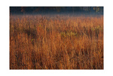 Little Bluestem Grasses On The Prairie