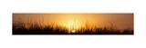 Sunrise Over Nachusa Grasslands
