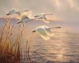 Elegant Migration