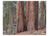 Sequoia General Sherman Grove 3