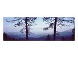 Sequoia Dawn Overlook