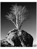 Tree in Solitude