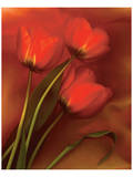 Tulip Fiesta in Red and Yellow II