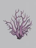 Iridescent Coral I