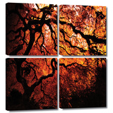 Fire Breather: Japanese Tree 4 piece gallery-wrapped canvas