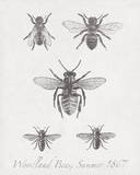 Woodland Insects I