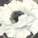 Pure Poppy II