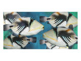 Huma Picasso Triggerfish II