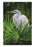 Palmetto Egret