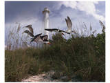 Lighthouse Terns I