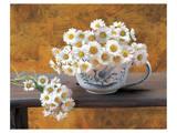 Daisy Delight I
