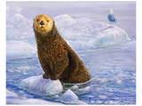 Otter Sketch Reproduction d'art par Chris Vest