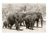 Elephants I