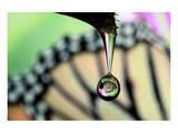 Butterfly Drop
