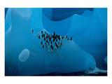 Penguin Group On A Glacier