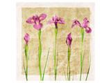Antique Iris I