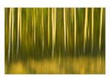 Tree Abstraction II