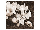 Sepia Orchid II