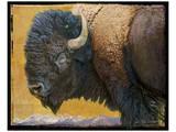 Bison II