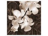 Sepia Orchid I