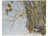 Late Snow Warbler