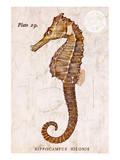 Vintage Seahorse  Hippocampus Hilonis  Sea Horse