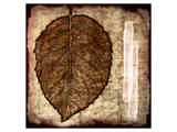 Fall Leaves I