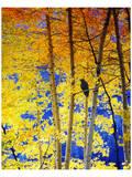 Autumn Raven