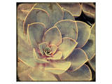 Green Rose IV