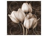 Sepia Tulip I