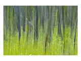 Tree Abstraction V