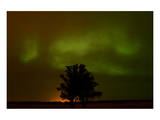 Northern Lights and Oak Tree