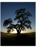 La Palouse Steptoe Tree Silhouette